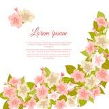 O vintage pastel cor-de-rosa floresce em torno do fundo branco para o convite do casamento, cartão da união, bandeira das felicit Fotos de Stock