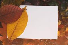 O vintage tonificou as folhas de outono para o fundo com Imagem de Stock