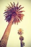 O vintage tonificou palmeiras no por do sol, fundo do feriado fotografia de stock