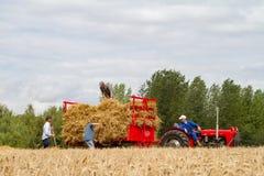 O vintage velho Massey Ferguson e o reboque na colheita colocam Fotografia de Stock Royalty Free