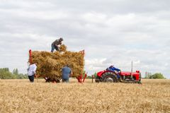 O vintage velho Massey Ferguson e o reboque na colheita colocam Imagem de Stock Royalty Free