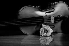 O violino e levantou-se Fotografia de Stock