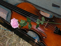 O violino e levantou-se foto de stock royalty free