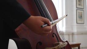 O violoncelista profissional joga em cordas com através de uma curva, detalhe macro de instrumento filme