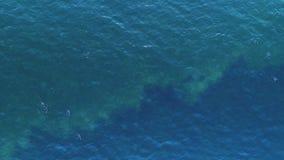 O voo do por do sol sobre o lago e a água ducks Opinião aérea do zangão, vídeo filme