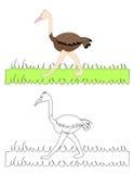 O voor struisvogel Stock Foto's