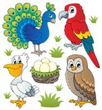 O vário tema dos pássaros ajustou 2 Fotos de Stock