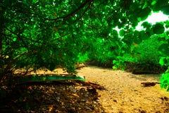 O Warmness no lago secado mangrove Fotos de Stock Royalty Free