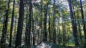 Oświetleniowy las Obrazy Stock