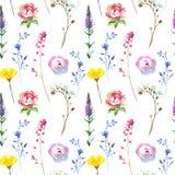 O wildflower pintado floresce o teste padrão do fundo em um estilo da aquarela ilustração royalty free