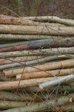 O Woodpile cortou acima em uma floresta no outono Foto de Stock Royalty Free