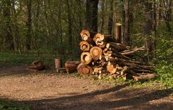 O woodpile na borda da floresta Imagem de Stock Royalty Free