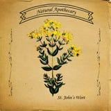O Wort de St John natural do farmacêutico Imagem de Stock Royalty Free