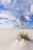 O Yucca no branco lixa o monumento nacional Imagem de Stock Royalty Free