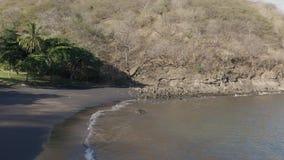 O zangão disparou na viagem sobre a praia preta da areia na selva seca de Costa Rica vídeos de arquivo