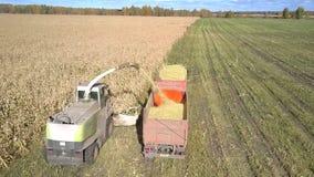 O zangão pendura sobre a ceifeira que recolhe a folha do milho pelo caminhão filme