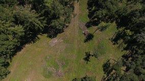 O zangão tira nas montanhas com pinheiros video estoque
