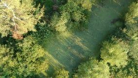 O zangão voa acima acima da paisagem verde do pântano do verão com água e esfrega vídeos de arquivo