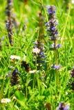 O zangão voa em um jardim entre flores na luz do sol Foto de Stock Royalty Free