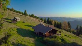 O zangão voa entre abeto nas montanhas Carpathian vídeos de arquivo