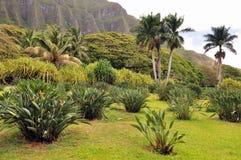 Oahu rural photographie stock libre de droits