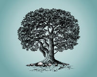 Oak. Llustrations of tree isolated over color background. Additional format Illustrator 8 eps Stock Photo