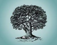 Oak. Llustrations of tree isolated over color background. Additional format Illustrator 8 eps royalty free illustration