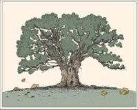 Oak. Tree. Additional  format Illustrator 8 eps Stock Photos