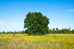 Oak Stock Images