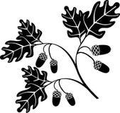 oak Arkivbilder