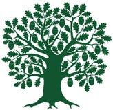 oak royaltyfri illustrationer