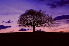 Oak. On the hill during the sunset Royalty Free Stock Photo