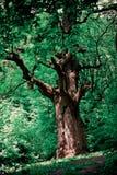Oak Stock Photography