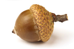 Oak acorn. One brown oak acorn on white, shallow dof Royalty Free Stock Image