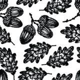 Oak acorn background Stock Photo