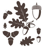 Oak. Acorn. Isolated objects on white background. Vector illustration (EPS 10 Stock Images