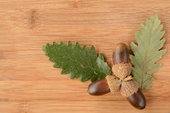 Oak acorn and  leaves Stock Images