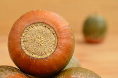 Oak acorn Royalty Free Stock Images