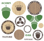 Oak. Acorn. Wood Stock Photos