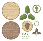 Oak. Acorn. Wood Royalty Free Stock Photos