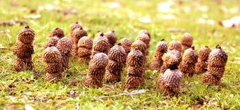 Oak acorns detail Royalty Free Stock Images