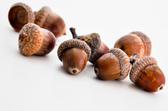 Oak acorns detail Royalty Free Stock Photo