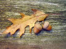 Oak acorns and leaf. On old wooden desk Stock Photos