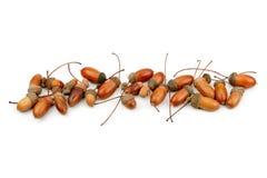 Oak acorns. On white background Stock Photo