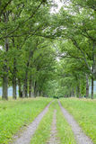 Oak Allee Royalty Free Stock Images