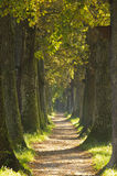 Oak alley. Alley with oak trees and path Stock Image