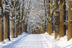 Oak alley country road in winter Stock Photo