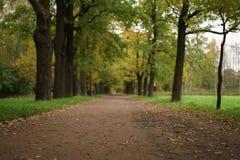 Oak alley in park in early autumn Stock Photo