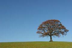 The Oak In Autumn Royalty Free Stock Photography