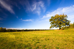 Oak (autumn) Royalty Free Stock Photos